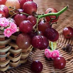 Desejo de vinho! (vecarabelo) Tags: cachodeuva cesta colheita farm fresh grapes horta natural organic rstico uvas