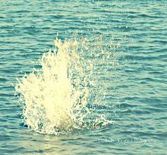 Splash (Ƹ̴lizαbeth ۫◦۪°) Tags: water agua h2o splash acqua salpicón chapoteo fotoarchivo clicktogether mielylimón