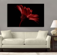 Fire Daisy Red (Simply Canvas Art) Tags: art wallart flowerart homedecoration flowerprints flowercanvas flowerwallart flowercanvasprints flowercanvasart flowercanvaswallart