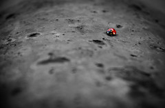Lonely Ladybird (myfrozenlife) Tags: beach nature metal rust awesome ladybird