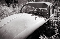 Abandoned Volkswagen Beatle (Pictures from the Ghost Garden) Tags: blackandwhite bw cars film monochrome blackwhite classiccars blancetnoir weissundschwarz