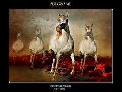 FOLLOW ME (jawadn_99) Tags: blue red horses horse favorite white black green art animal poster photography fantastic flickr angle vivid scout explore arab picnik raising pinc galope vividimagination supershot thegalaxy stalion abigfave flickrdiamond tatot saariysqualitypictures magicunicornverybest coth5 magicunicornmasterpiece theoriginalgoldseal mygearandme ringexcellence blinkagain bestofblinkwinners shiningexcellence galleryoffantasticshots horses22 sunrays5 interrestigness