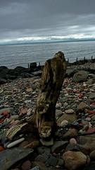 Driftwood Standing (Declyn6968) Tags: wood sky beach coast rocks pebbles east pebble driftwood coastal firthofforth wemyss buckhaven eastwemyss