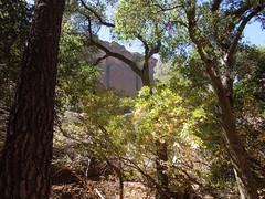 Pinnacles (67) (returnoftheyeti) Tags: camping nationalpark hiking pinnacles pinnaclesnationalmonument balconiescave dayhikes beargulch
