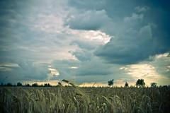field trip fridays (angsthase.) Tags: sky blur green clouds germany deutschland weeds himmel wolken nrw grün dailylife friday ruhrgebiet dortmund freitag 2012 ruhrpott mft micro43 lumixg20f17 olympuspenepl1