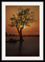 Sunset Tree in the Lake (saleem shahid) Tags: