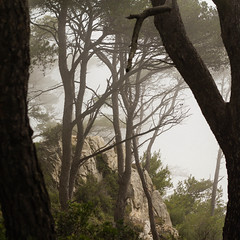 Fume de mer (ben0son - www.ben0son.com -) Tags: trees summer mist france tree silhouette fog forest smog holidays pins t var brouillard bandol brume sud mditerrane