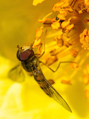close - up (Andreas Jo) Tags: summer macro nature insect foto fotografie sommer natur insects olympus nah makro insekt insekten macrophotography nahdran 50mmmacro20 makrofotografie macrographie olympusomd olympusem5 olympusomdem5