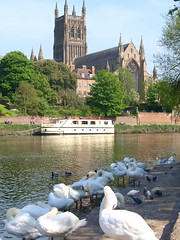 Worcester Cathedral (5) (Tony Worrall Foto) Tags: uk england building tower english history classic church wet water birds architecture river photo view image god britain wildlife scenic visit scene historic severn spire holy fowl visitor waterway attraction worcester postacard relic midlands anglicancathedral worcestercathedral sawns 2012tonyworrall