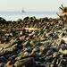 Driftwood Beach 1