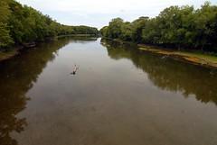 Mussel Haven! (Matthew Ignoffo) Tags: water creek river matt stream matthew sensitive endangered mussel habitat threatened declining ignoffo