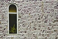 ventana_con_conchas