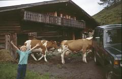 DU 83-13 (fkMohr) Tags: salzburg bucheben