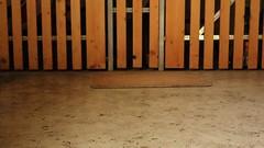 dirty feet - indoor 583 (dirtyfeet6811) Tags: feet soles barefoot dirtyfeet dirtysoles blacksoles