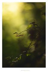 GLEN (Patrick GOUJON) Tags: mante mantis patrickgoujon easyamses religieuse insecte insect religiosa praying