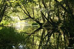Reflections in the river (photoschete.blogspot.com) Tags: canon 70d eos avila navaluenga sigma castillayleon rio river alberche arboles trees reflejo reflection verde green nature naturaleza verano summer