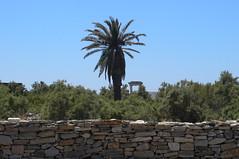 P1280552 (Cinzia, aka microtip) Tags: delos cicladi grecia archeology antichit archaelogy island unescoworldheritagesite mithology sanctuary ancientgreece