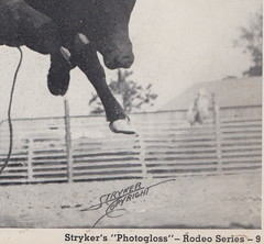 Cowboys Cowgirls & Rodeo c.1940 DALE ADAMS TOSSED HARD IN THE BRAMA BULL RIDING CONTEST Photographer STRYKERS STUDIO Rodeo Series 94 (UpNorth Memories - Donald (Don) Harrison) Tags: vintage antique postcard rppc don harrison upnorth memories upnorth memories upnorthmemories michigan history heritage travel tourism michigan roadside restaurants cafes motels hotels tourist stops travel trailer parks campgrounds cottages cabins roadside entertainment natural wonders attractions usa puremichigan