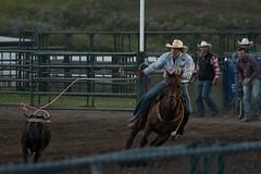 Tak_CPRA_2016-5220 (takahashi.blair) Tags: coachtak rodeo blairtakahashitakahashiblaircoachtakblairtakahashi pincher creek barrel racing bronc rope bareback steer bullriding