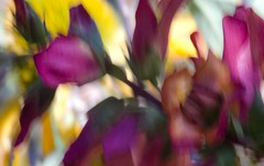 foxglove love (Noel Leone--my reality in and out of focus) Tags: foxglove icm intentionalcameramovement colorful summer garden watercolorish paintingwithacamera flowers blur bokeh softfocus
