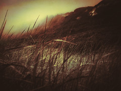 Introspection (Colormaniac too) Tags: pacificbeach beachgrass reverie tones beauty mist misty beach grass washingtonstate pacificnorthwest washingtoncoast distressedtextures topaztextureeffects outside landscape
