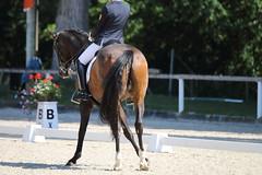 IMG_7700 (dreiwn) Tags: dressage dressur dressuur pferd reitturnier turnierreiten pferdesport horse horseback horseriding equestrian reitverein dressurprfung kandare doublebridle reiten pferde reitplatz ridingarena