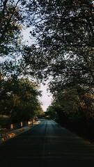 [28/365] (heyenrik) Tags: 365 days dias 365days 365dias 365project project sky tree paisaje aire libre landscape comunidadespañola