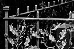 Einfriedung (frodul) Tags: einfriedung zaun invalidenfriedhof grabmal grab gedenken erinnerung gedenksttte friedhof sw monochrom bw berlin deutschland blatt guss