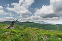Strome zbocze Skrzecznego (czargor) Tags: beskidy beskidslaski mountains mountainside baraniagora sightseeing