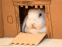 I'm the Queen of the Castle (Mike Woolley) Tags: azula bunny nikon rabbit summer