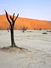 Sossuvlei sunset (vittorio vida) Tags: africa namibia sossuvlei desert tree dunes sand sunset light white dead death dry oasis travel