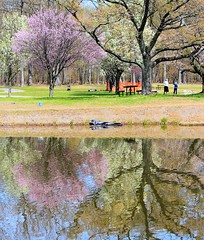 Parallel World (chantsign) Tags: park reflection water colors colorful tree spring nomahegan treetrunk landscape