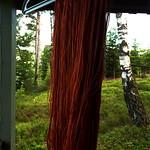 Cortinarius semisanguineus Rödskivig spindelskivling alunbetat alpackagarn med silke thumbnail