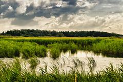 Newport wetlands reserve (Old man  big kid) Tags: trees sky water clouds reeds reedbed me2youphotographylevel2 me2youphotographylevel3 me2youphotographylevel1 me2youphotographylevel4