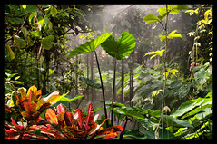 In the jungle (Lars-Ove Trnebohm) Tags: nature natur jungle djungel