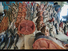 fresh fish for sale at the Marche Central in Casablanca, Morocco (jitenshaman) Tags: africa travel fish fishing market salmon fresh morocco squid seafood destination vendor casablanca bazaar tuna snapper moroccan centralmarket marchecentral worldlocations