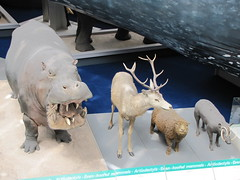 At the Natural History Museum (maineexile) Tags: london naturalhistorymuseumlondon