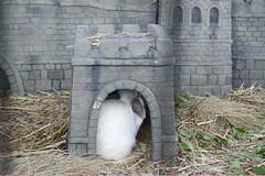 DSC09385 (Mitch'ins) Tags: bunnies sony sydney rabbits alpha ssm tarongazoo a850 sal70400g 70400mmf4556