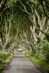 the dark hedges, northern ireland (laughlinc) Tags: road travel trees ireland landscape northernireland armoy nikond80 28300mmf3556 thedarkhedges thechallengefactory laughlinc