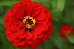 Flowers (Aperture111-Thanks for 1000000+ views) Tags: flowers bokeh sony carlzeissvariosonnartdt1680mmf3545za slta65v sonyalpha65 slt65v me2youphotographylevel1