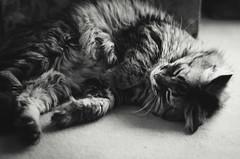 sweet cat (thisisforlovers) Tags: city bw paris france cat photography nikon chat bn sleepy vignetting durmiendo d7000