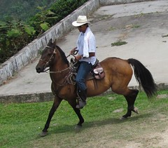Un chaln criollo. (baritamorales) Tags: horse naturaleza man nature caballo colombia hombre caldas neira