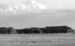 goldenhay1bwL1004379 (borjoz -thx for (half)Million views :)) Tags: grass clouds nationalpark hungary hay blackwhitephotos hortobgy