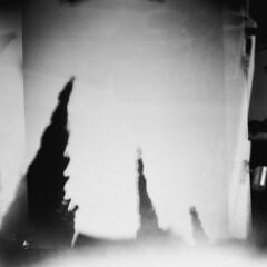 (Irene Stylianou) Tags: lomography lomographydiana diana d dianaf lomo lomograph lomocamera toycamera plasticcamera filmcamera film 120 lomographyfilm lomographyblackandwhiteearlgrey100iso blackandwhitefilm blackandwhite bw filmphotography analog analogphotography analogcamera analogue mediumformat squareformat sooc nophotoshop nature landscape cyprus larnaca song songlyrics pinkfloyd takeitback trees irenestylianou