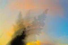 233 // 366 - Caida / The Fall (Job Abril) Tags: paisaje landscape cielo sky colors tree artisticphotography conceptualphotography 365 nikon