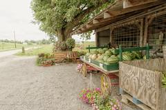 Roadside Market (Denise @ New Mercies I See) Tags: 2016 august summer ohio produce market vegetables flowers countryside winesburg holmescounty onethousandgifts amish amishcountry