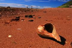 Shell (alideniese) Tags: shell seaside sand closeup coastal depthoffield sunny sunshine outdoors shoreline people beach landscape longisland ny usa