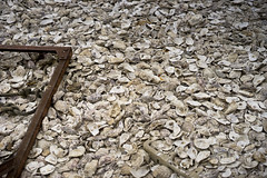 Oyster Shells (jamiethompson01) Tags: whitstable beach uk unitedkingdom august sony a7 zeiss 55mm 18f oysters