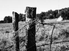 Barb Wire Wrapped Fence Post (Omni-Photography) Tags: fence fencepost barbed wire barbedwire mamiya mamiya645 film scan ektar