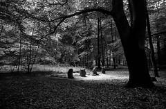 Einsame Gräber im dunklen Wald (Lichtabfall) Tags: einfarbig forest wald trees tree bäume baum monochrome blackwhite blackandwhite schwarzweiss gräber graves grabsteine gravestones vier 4 four